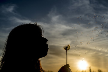 a silhouette of a young girl with dandelions