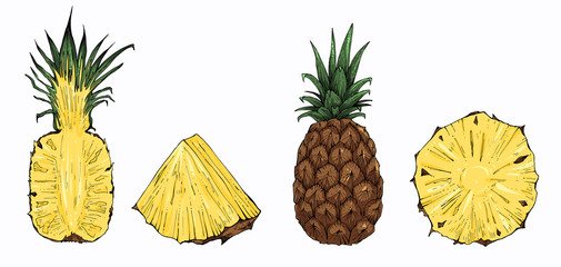 Pineapple vector set, whole and sliced
