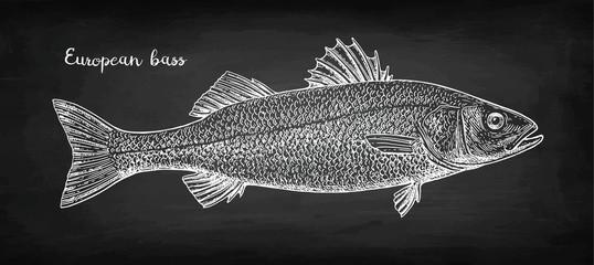 Chalk sketch of sea bass
