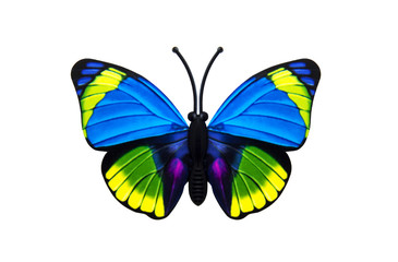 Beautiful colored butterfly