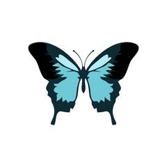 Butterflies vector icon