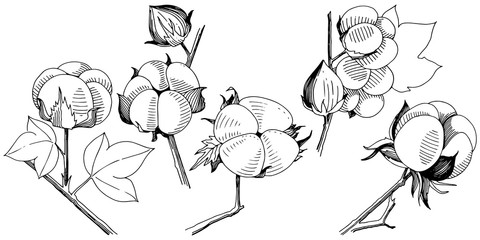 Vector cotton. Floral botanical flower. Wild spring leaf wildflower isolated. Vector wildflower for background, texture, wrapper pattern, frame or border.