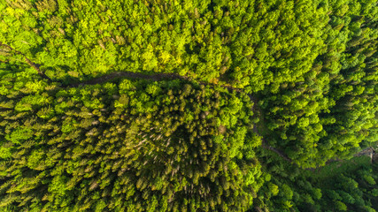 Aerial view close-up of a forest with green trees