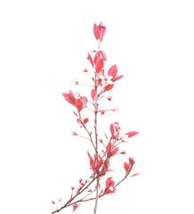 Delicate pink buds against a white background