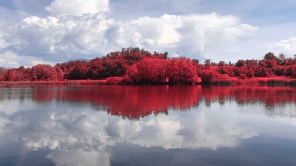 trees that are reflected in the lake - infrared photography