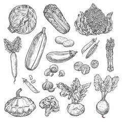 Vegetables organic vector isolated sketch icons