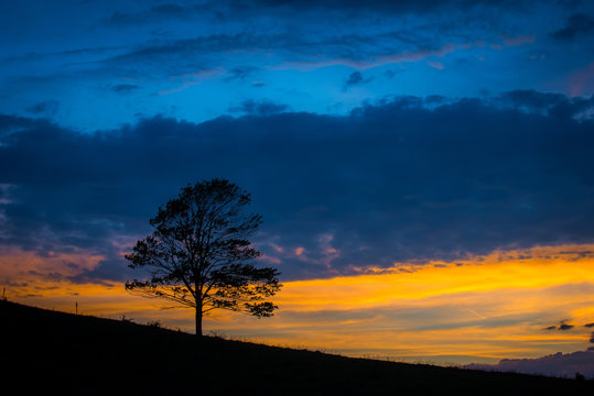 Lone Tree in Field against Sunset