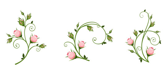Fototapeta Set of vector decorative elements with pink rosebuds isolated on a white background.