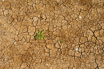 Dry ground with a weed growing