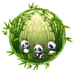 Pandas are playing in bamboo