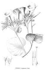 Illustration of plant.