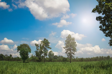 Green grass field on farmland and blue sky with clouds white.