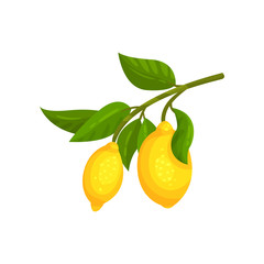 Branch with ripe lemons and green leaves. Delicious citrus fruit. Decorative flat vector element for bottle of lemonade or tea packaging
