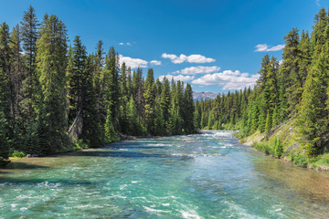 Beautiful forest on the river in Banff National Park, Canada.