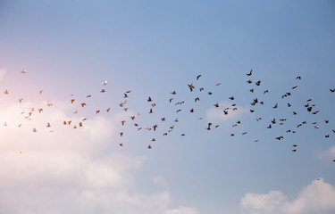 group of bird flying in clearly sky with mornig light