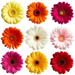 Autocollant pour porte Gerbera Set of gerbera flowers isolated on white background