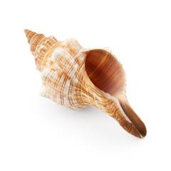 Seashell isolated on white background