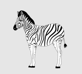 cartoon zebra, black and white lines