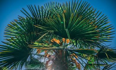 Wall Murals Botanical Palm Tree