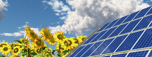 Solar panel and sunflowers