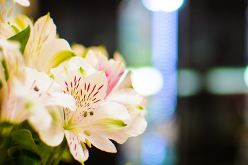 Defocused blurred background of lights with flowers in the corner, with space for text or image