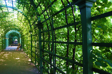 tunnel from a wooden green lattice and trees on a sunny afternoon