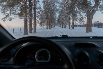 snow alley of trees view from the car