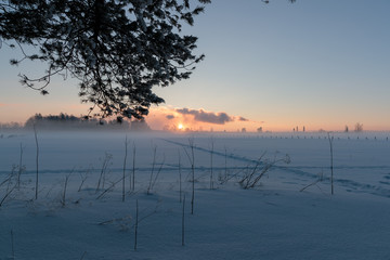 sunset in a snowy field and with tree branch