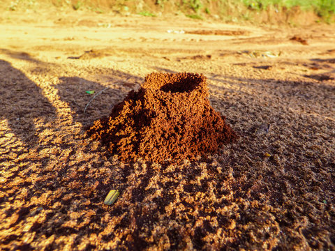 Ant colony made of red soil