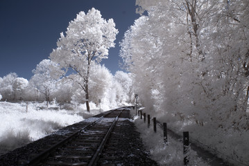 Trees in infrared - Germany - Schleswig Holstein