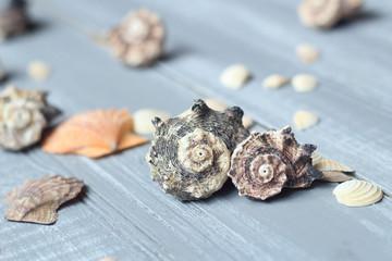 sea shells background image on light wooden background