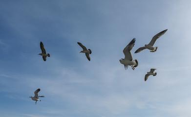 Flying seagulls over blue sky.
