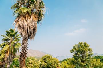 Palm trees at Rajiv Gandhi Park in Udaipur, India