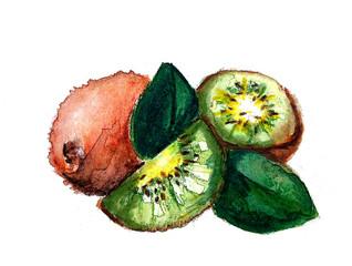 water colour kiwi