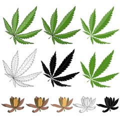 Cannabis leaf and flower in colors, black and white. Illustration for emblem herbal tea and health shop.