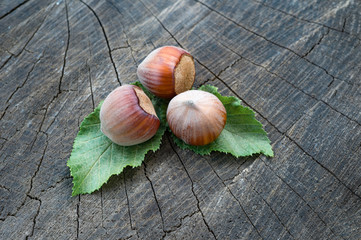 three nuts hazelnuts with leaves