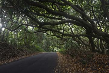 Dense vegetation on a road in Big Island, Hawaii