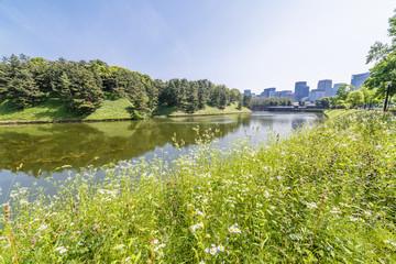 東京都市部の自然
