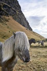 Icelandic horses standing on grassy field