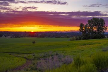 Sunset meadow on farmlands