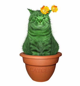 The cat cactus sits in a flower pot. White background.