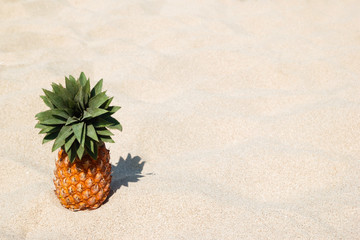 Ripe sweet pineapple on the white sand beach on a sunny day, with copy space.