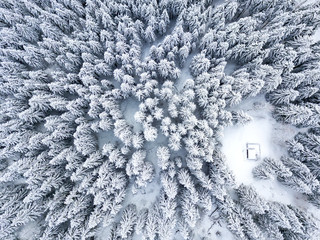 Aerial view of trees covered with snow during winter