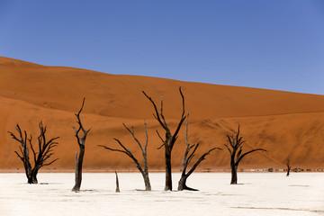Dead Acacia in Deadvlei area, Namibia