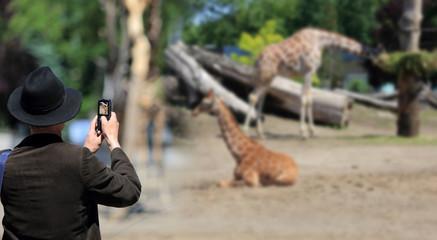 Mężczyzna w kapeluszu robi zdjęcie telefonem komurkowym żyrafom w zoo.