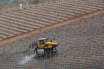 Workers spray a hillside of newly planted tomatoes in Bonsall, California