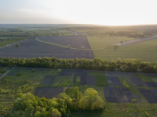 Wall Mural - Landscape view over the field and trees against the sky. Photo from the drone