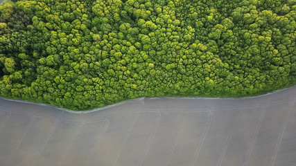 Aerial view a spring green forest and an asphalt road. Photo from the drone