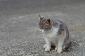 落ち込む三毛猫