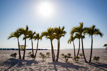 Palm Trees on St. Pete beach